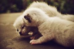 14067645_564306010417017_1725661911189851728_n (guglielmi.federica21) Tags: gatti cats animals animali pet puppy