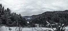Winters sorrow [Panorama] (gnseblmchen) Tags: trees wallpaper plants tree nature forest landscape landscapes background natur stock pflanzen free creativecommons vegetation wald bume baum dri forests hdr highdynamicrange landschaften lanschaft dynamicrangeincrease wlder