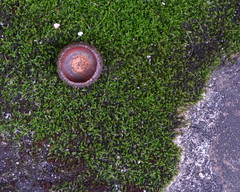 Nature's collage (The Dolly Mama) Tags: collage stone yard moss front acorn