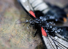 Butterfly World - January 2015 (Fi-Nix Photography) Tags: macro texture nature canon photography edinburgh artistic butterflies 100mm raindrops imagination jewels challenge finixphotography