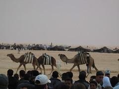 Camel Parade at International Festival of the Sahara