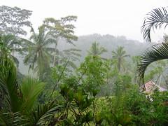 Jungle of Central Bali