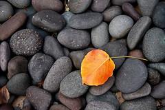 One (shumpei_sano_exp3) Tags: autumn fall nature rock stone outdoors leaf minimal challengeyouwinner shotsilove