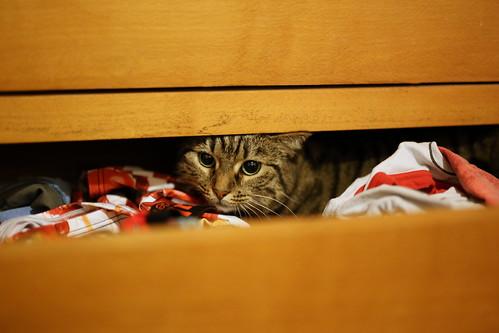 Cat and panties