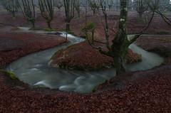 Aguas (BIZKAIA) (Jonatan Alonso) Tags: rio agua nieve invierno frio gorbea meandro hayedo negua otzarreta