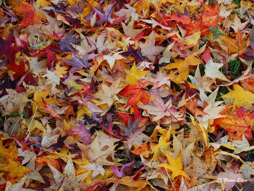 Águas Frias (Chaves) - ... variedade de folhas caídas ...