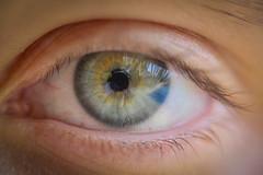 EZ Eye (hoomanz) Tags: macro eye closeup lens with extension kenko