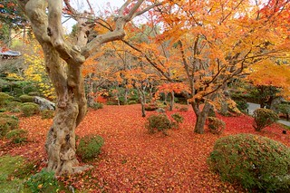 敷紅葉 - 圓光寺 / Enko-ji Temple
