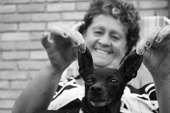 (bruna.pf28) Tags: bw dog bat pinscher batdog