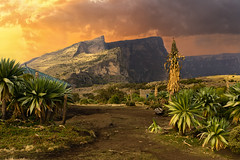 The Peak (departing(YYZ)) Tags: africa park travel sunset cliff mountains green bird nature rock composite zeiss 35mm landscape outside nationalpark highlands sony horizon scenic verdant wilderness fe ethiopia alpha epic a7 highaltitude monumental simienmountains sonnartfe35mmf28za
