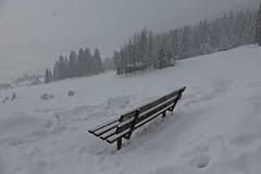 HBM :-) (fxdx) Tags: mist snow fog bench flims hbm