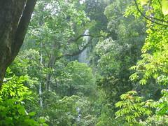 Rainforest of Pico Bonito Park