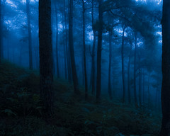 Into The Woods (macolive) Tags: fuji xpro2 16mm fog pinetrees baguio campjohnhay solitude peaceful quiet