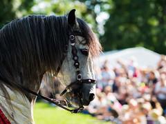 Horse portrait (markvall) Tags: turku hevonen keskiaika turnajaiset horse medieval tournament