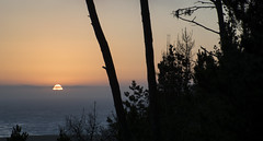 Pine Tree_Sunset (Joe Josephs: 2,650,890 views - thank you) Tags: california trees sunset landscapes sunsets fineartphotography californiacentralcoast californialandscape landscapephotography outdoorphotography fineartprints californiasunsets joejosephs joejosephsphotography