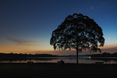 Counting Stars (elenaleong) Tags: twilight lastlight silhouettes reservoirpark longexposure startrails upperseletarnaturepark nightscape elenaleong beautifultree