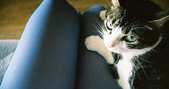 If a dog jumps into your lap it is because he is fond of you; but if a cat does the same thing it is because your lap is warmer. via http://ift.tt/29KELz0 (dozhub) Tags: cat kitty kitten cute funny aww adorable cats