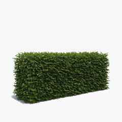 Boxwood Hedge 150 cm (oleg_scolt) Tags: plant hedge box shrub garden topiary park bush nature foliage leaf boxwood buxus fence architecture visualization exterior 3d green set collection