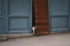 270616 (kleoskleos) Tags: animal street madrid ciudad cat gato city