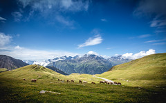 Grossglockner | High Alpine Road (SebastianJensen) Tags: austria landscape grass blue sky cloud mountains road roadtrip adventure europe animal exploration view vacation viewpoint nature travel height w