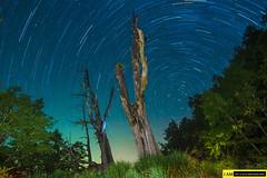 DSC_5158 (jack147az) Tags: 塔塔加 夫妻樹 星軌 銀河系 森林 nikon d750 1530