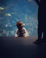My Tiny Jacques Cousteau. (companyfromechoes) Tags: aquarium californiaacademyofsciences steinhart toddler lowlight expression shadow nikonafsnikkor85mmf14g rugrat directionallight sanfrancisco indoor boy