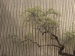 Minimalism (JL Outdoor Photography) Tags: uofalberta minimalism nature tree wall concrete