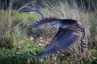 Radiating Feathers