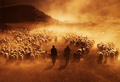 Dusty Lives (abdllahmetin) Tags: anatolia turkey trkiye sepia sepya dust human people flock sheepherd bitlis