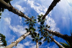 Endless sky (fxdx) Tags: endless sky palm clouds tree nex6 tenerife spain fisheye fish eye