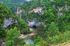 Gorges du Tarn ( photopade (Nikonist)) Tags: tarn gorgesdutarn nikond300 nikon nature paysage apple