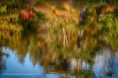 Autumn Reflections 2 (RichHaig) Tags: me water reflections maine autumncolors fallfoliage acadia barharbor mountdesertisland mdi acadianationalpark gitzotripod asticouazaleagarden nikond800 nikonnikkor24120mmf40