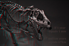 T-Rex-Raw-3D-anaglyph-01-(red-cyan-glasses-required) (Aaron & Radhika) Tags: camera new old red eye art monster museum photoshop t skeleton fossil skull design three photo stereoscopic 3d big scary nikon artist raw photographer cross post dinosaur designer reptile space teeth year aaron captured cyan optical anaglyph sharp lizard stereo zealand illusion photograph adobe wellington million bones papa format spatial years te eyed dslr rex effect processed depth 67 trex fossils carnivore tyrannosaurus dimensions dimensional cs5 openshaw d3100