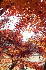 color of the season (Uno Lin) Tags: japan nara kansai