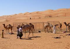 Life in  Wahiba Sand - Qatar (collage42 Pia M.-Vittoria S.) Tags: sand asia qat