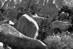 Joshua Tree National Park, 2014 (matt-artz) Tags: blackandwhite desert joshuatree mojavedesert joshuatreenationalpark