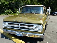 Dodge 100 (bballchico) Tags: dodge100 dodge pickup truck ratbastardscarshow ratbastardsinfestationcarshow 2014 206 washingtonstate
