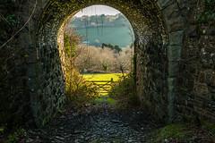 Through the mini bridge (trevorhicks) Tags: bridge winter field grass canon railway devon tamron tavistock 70d