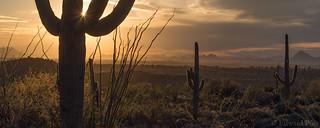 Saguaro National Park-East