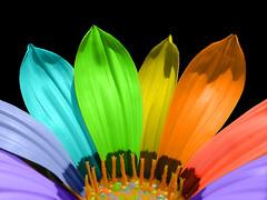 Rainbow Laptop Backgrounds Free Desktop (tapeper) Tags: desktop rainbow laptop free backgrounds