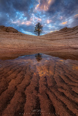 Tree of Life (Vertical) (Mark Metternich) Tags: arizona white reflection tree sunrise sand sandstone tour desert mark cliffs workshop pocket tours solitary vermilion workshops metternich brainrock markmetternichcom