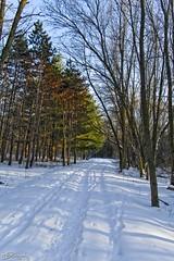 Wisconsin Winter Woodland (JBtheExplorer) Tags: park winter snow wisconsin woodland river woods hiking colonial trail parkway root wonderland pathway racine