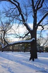High Park - Toronto - Canada (Sam Colavito) Tags: park toronto walking high sam around fotografia canadá colavito
