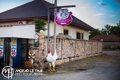 DSC_2946 (MORAD LE THAI Photography) Tags: pattaya thailande sityodtong muaythaï