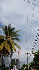 Who is taller Tree or Tower (M.K.Muruganandan) Tags: skycoconuttreetower