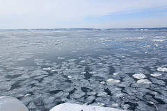 Sea of drift ice /  (yanoks48) Tags: sea japan hokkaido    abashiri   driftice  seaofokhotsk