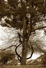 DSC_1131BW (dennischap) Tags: arizona coloradoriver parker buckskinstatepark