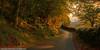 Autumn Magic - Blaen Nanmor (Daveyboy_75) Tags: olympus autumncolours dslr hdr eveninglight northwales countrylanes hdrphotography subtlehdr eveninglighting snowdoniawales autumnmagic e450 walesphotography autumnphotography autumnlighting davidneale blaennanmor walesroads davidnealephotography processingolympus