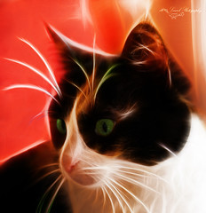 the cat of my daughter (laurek.photography) Tags: portrait art animal cat fantastic chat special effect effet speciaux fractalius