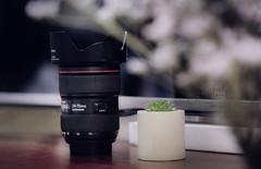 lens 24-70 (Tho Midori) Tags: lens 2470 ong kinh canon